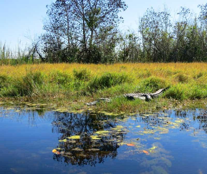 Turner River Kayak Trail, Big Cypress National Wildlife Refuge.