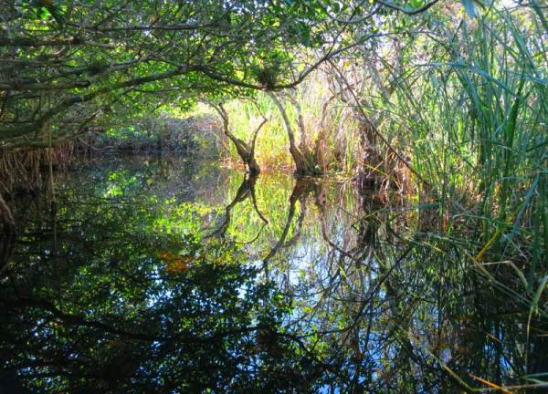 Turner River Kayak Trail, Big Cypress National Wildlife Refuge is one of the best places to kayak in Florida.