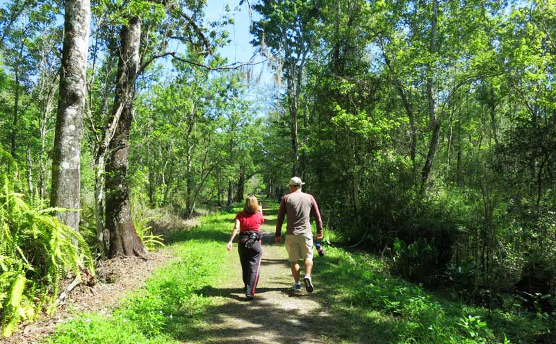 There are 12 miles of trails at CREW Bird Rookery Swamp Trail.