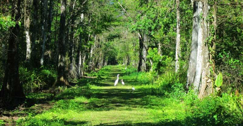 bird rookery swamp trail Naples Bird Rookery Swamp: It's a beauty for hiking, biking, wildlife