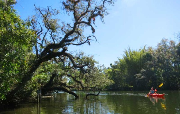 The Orange River in Fort Myers is not a wild river, but it is beautiful and peaceful kayak trail.