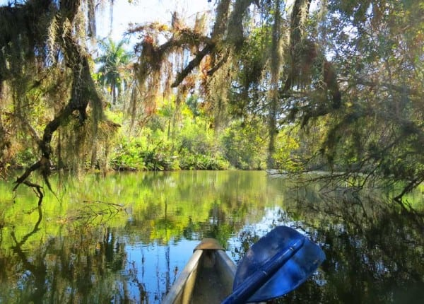 The further upstream you paddle on the Orange River in Fort Myers, the more Old Florida the ambiance becomes.