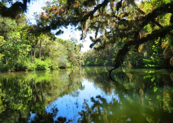 A scene along the Orange River, accessible from Fort Myers Manatee Park.(Photo:Bonnie Gross)