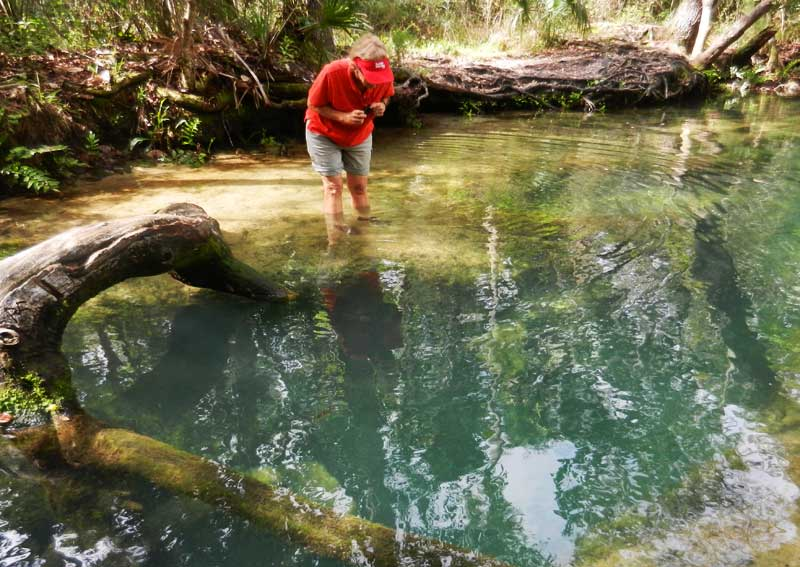 Chassahowitzka the crack The Chaz: Springs & wildlife make this river a special kayak trail