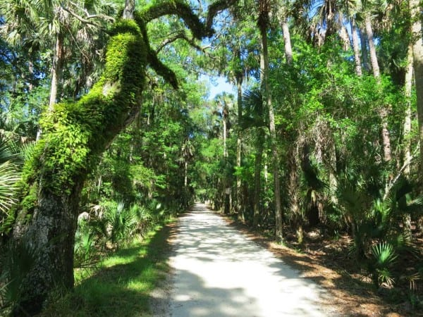 The narrow dirt road that leads to Bulow Plantation Ruins Historic State Park in Flagler County.