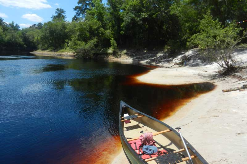 The Suwannee River is a blackwater river, which means its color comes from tannins in decaying vegetation.. This sandbar is the kind of spot you can stop to picnic or camp during a Suwannee River kayaking and canoeing trip. (Photo: Bonnie Gross)