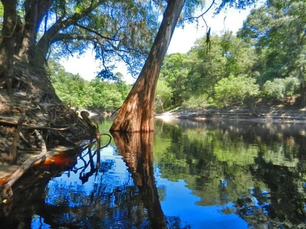 Suwannee River kayaking and canoeing will reward you with tranquility and beauty