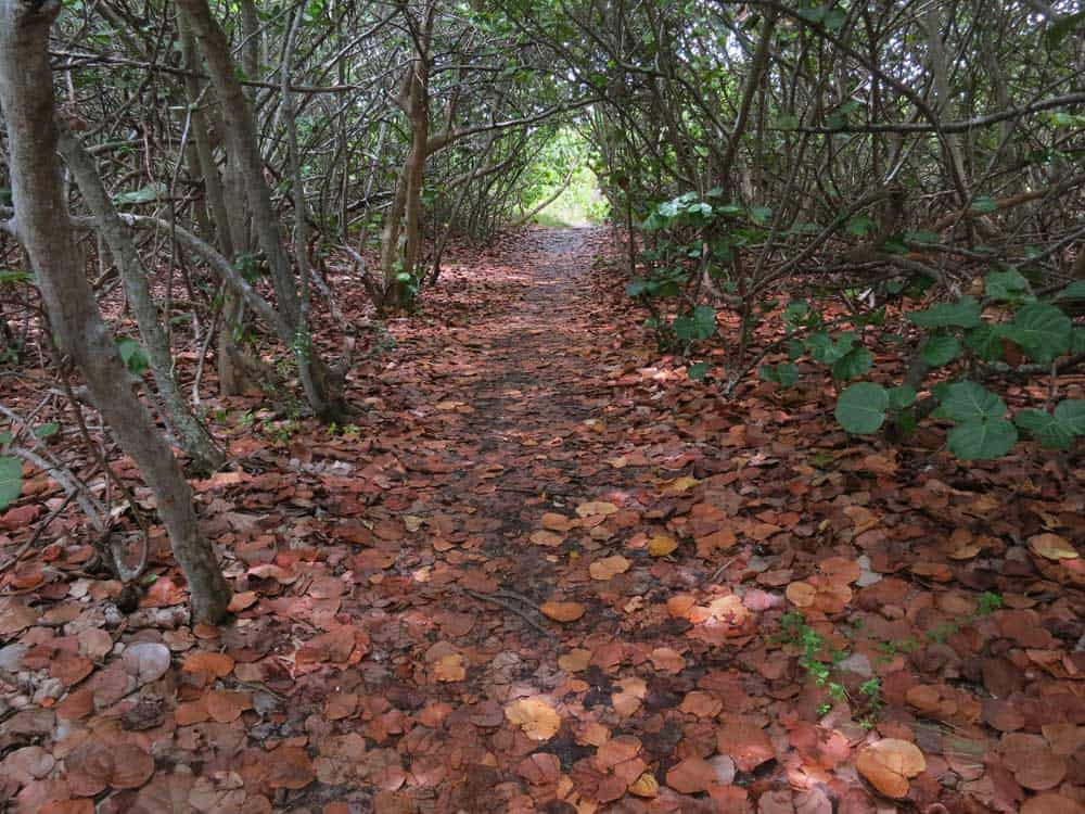 Nature trail at Bill Baggs Cape Florida State Park on Key Biscayne.
