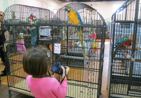 The Aviary at Cauley Square in the Redlands Florida.