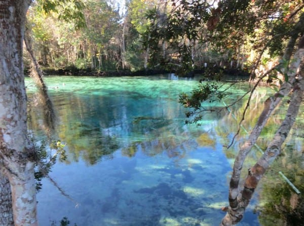Three Sisters Springs: A good place to see Crystal River manatees