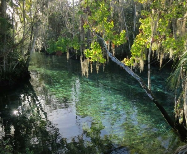 Crystal River manatees frequest Three Sisters Springs in winter.