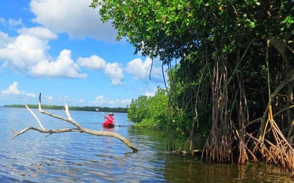 Kayaking near Matlacha FL.