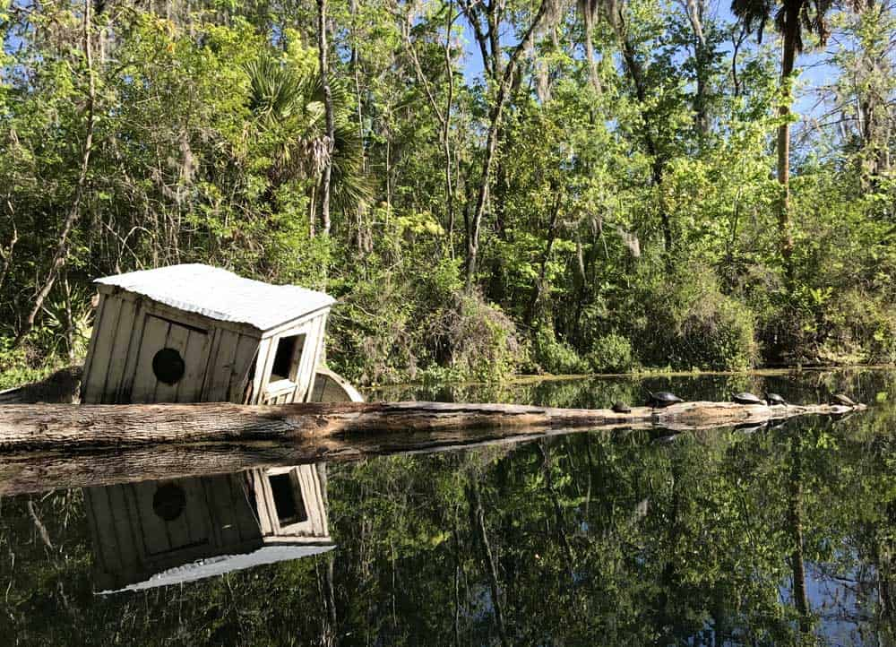 A sunken boat is a haven for turtles along the Silver River in Silver Springs Stae Park. (Photo: Bonnie Gross)