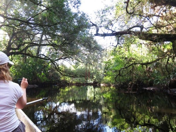 Telegraph Creek near Fort Myers, where you can kayak with llamas in Florida.