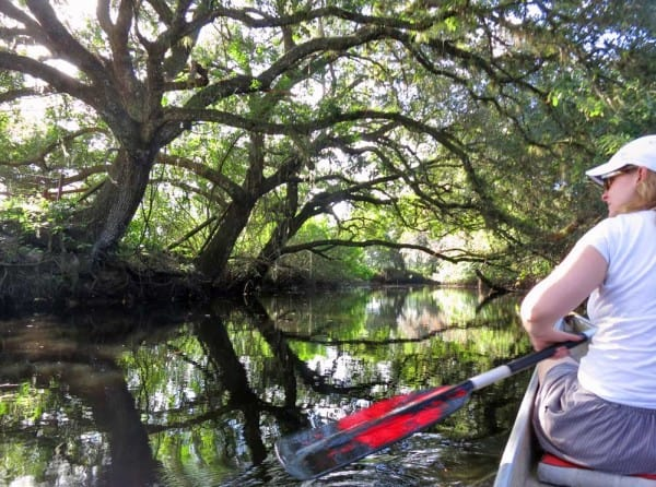 Live oaks arch over Telegraph Creek, where you can kayak with llamas in Florida
