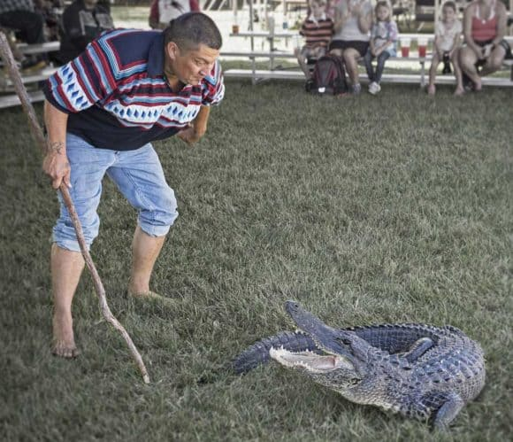 Alligator wrestling is demonstrated at the Seminoles American Indian Arts Celebration.
