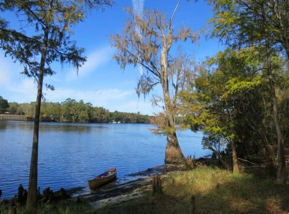 Along Suwanee River between Fanning and Manatee Springs. (Photo: Bonnie Gross)