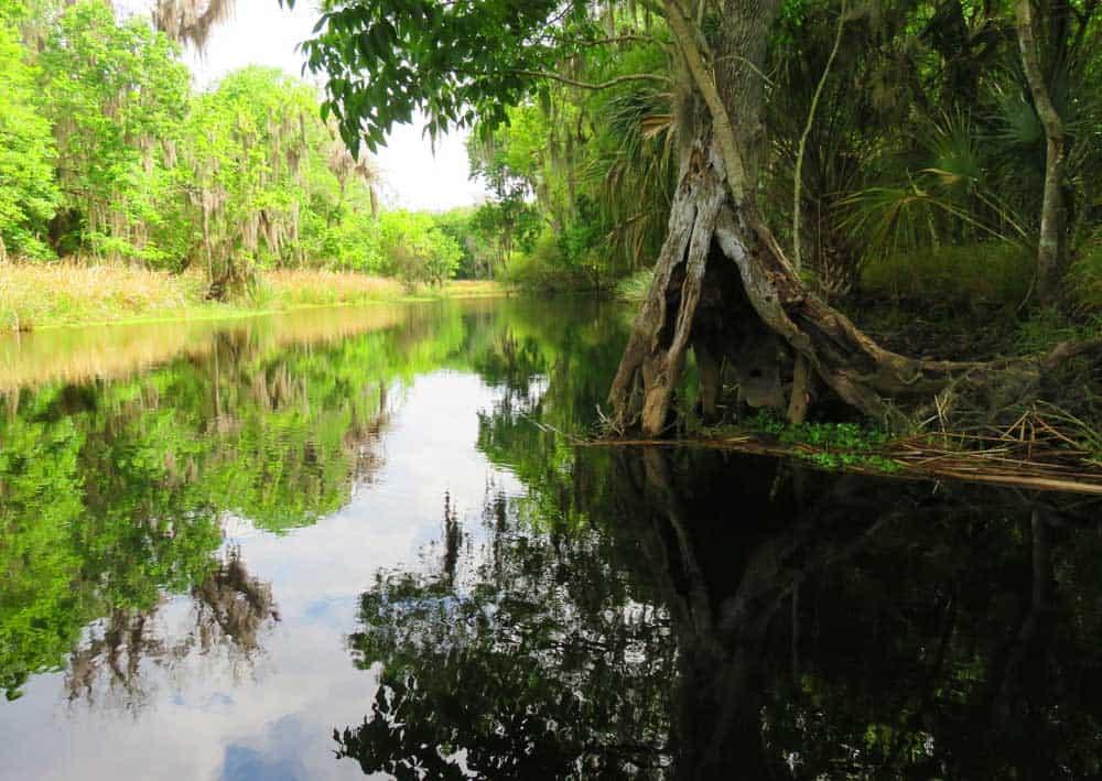 lake k 2rosalie creek 1 Buster Island Loop: Challenging kayak trail circles Lake Kissimmee State Park