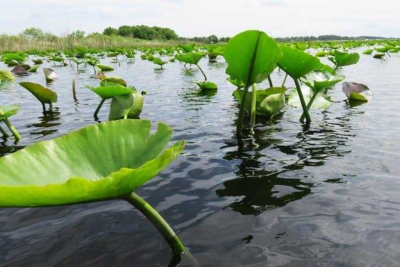 Lake Kissimmee is huge -- 35,000 square feet.