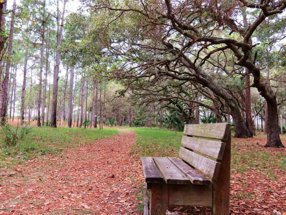Hiking trail at Lake Kissimmee State Park.