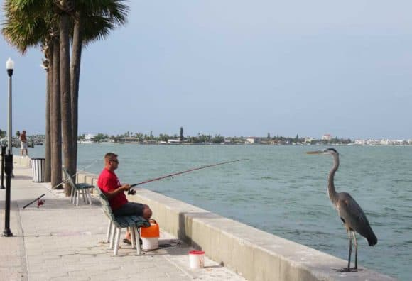 On the Intracoastal channel side of Pass-A-Grille, you'll find fishermen and their fans.