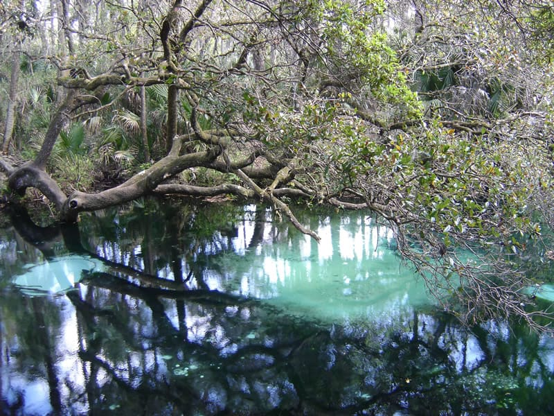 The dazzling blue of the river at Juniper Springs, Florida. (Photo: U.S. Forest Service.)