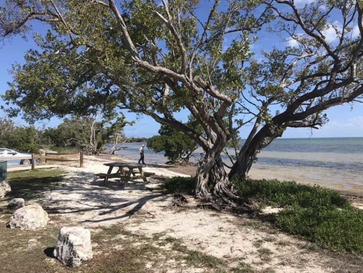 Beachfront picnic table at Long Key State Park. (Photo: Bonnie Gross)