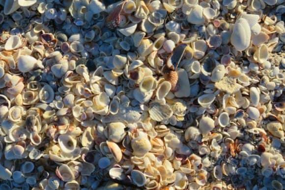 Piles of seashells at Stump Pass Beach State Park, Englewood.