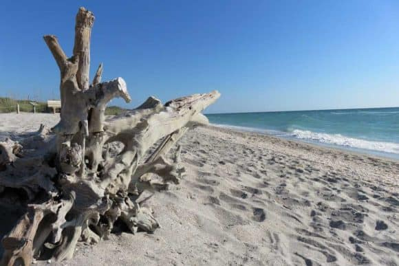 The many sun-bleached dead trees give the Stump Pass Beach State Park its name. It's one of the Florida barrier islands between Sanibel and Tampa Bay.