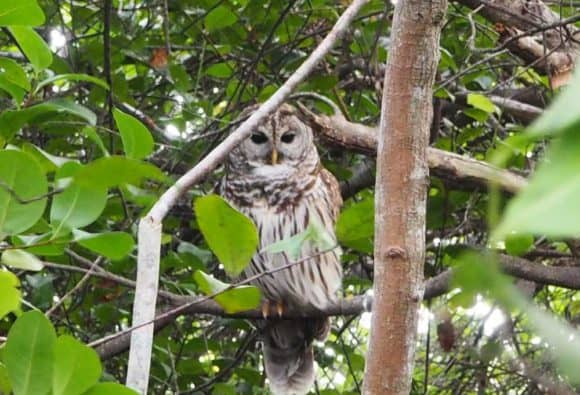owl everglades Visitor tips for exploring Everglades National Park
