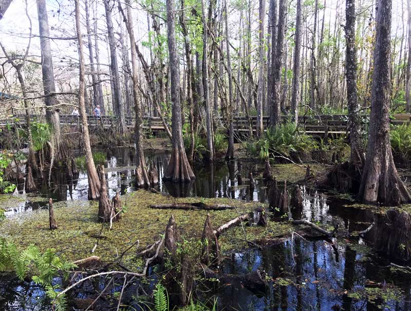 Six Miles Cypress Slough in Fort Myers. (Photo: Bonnie Gross)