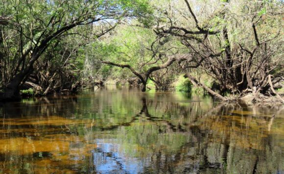The Little Manatee has been designated an Outstanding Florida Waterway by the Florida Department of Environmental Protection.  It runs through Little Manatee River State Park.