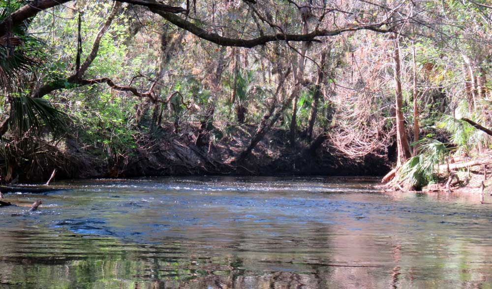 Alafia River: See the little riffle in the water? That's one of the shoals that make the water rush a bit.