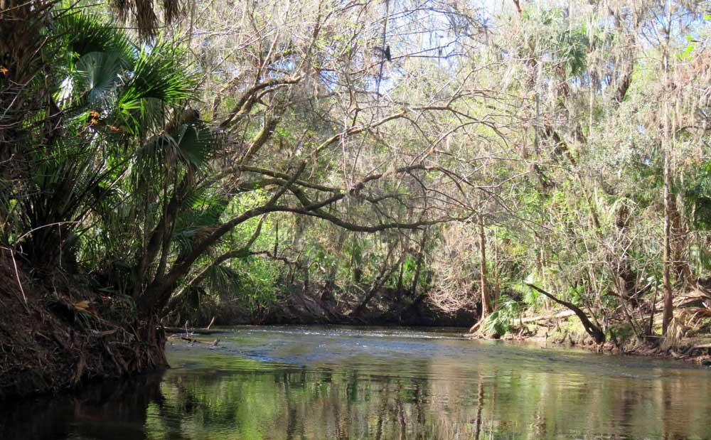 alafia rapids2 Alafia River: Kayaking through tame rapids a half hour from Tampa