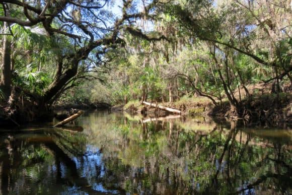 The Alafia River near Tampa river is lined with a tree canopy of magnificent cypress and beautiful live oaks dripping with Spanish moss and fuzzy with air plants. (Photo: Bonnie Gross)