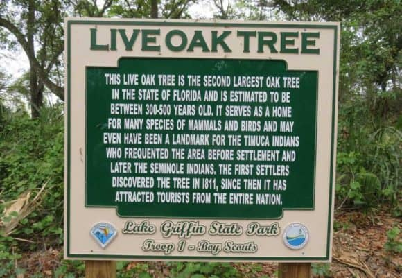 lake griffin live oak Stop at little known Lake Griffin State Park for a famous tree and more