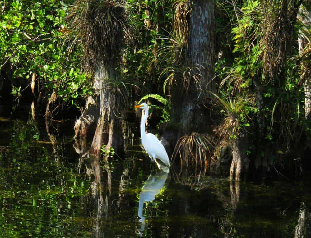 Nearby Big Cypress National Wildlife Refuge offers impressive birding and wildlife viewing. (Photo: Bonnie Gross)