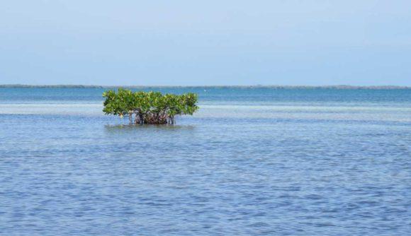 The peaceful bay side when kayaking Bahia Honda State Park in the Florida Keys. (Photo: Bonnie Gross)