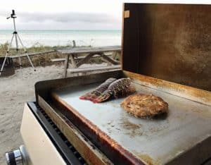 cookinglobstercrabcake Florida lobster: How to catch, cook and eat