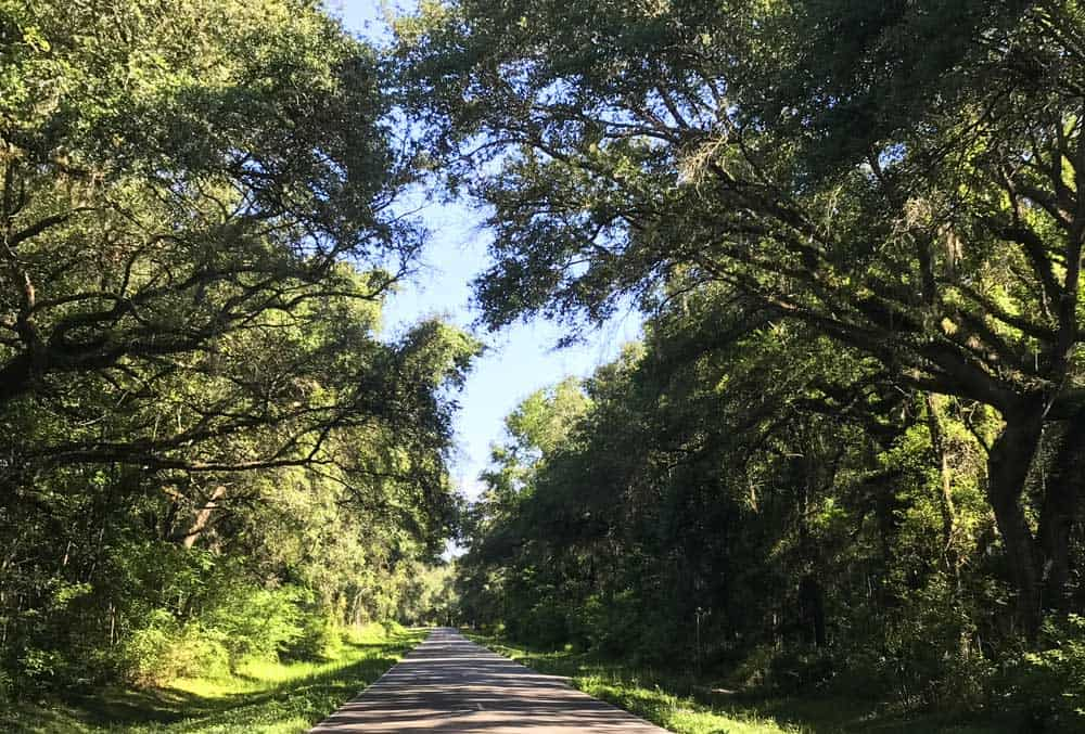The roads in northwest Florida  around Lafayette Blue Springs State Park have little traffic and are very scenic. (Photo: Bonnie Gross)