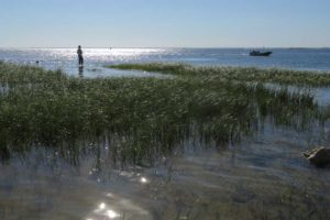 At the end of the levee at the lighthouse in St. Marks National Wildlife Refuge, we waded into the Gulf waters. (Photo Bonnie Gross)