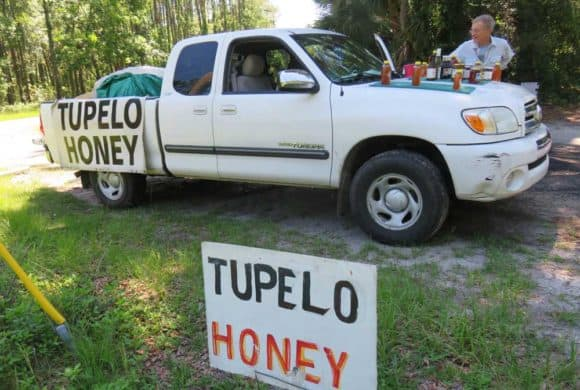 Tupelo honey comes only from bees who have visited blossoming tupelo trees, and the very best is from along the Apalachicola River valley nearby. It is so special it is hard to find outside this region. (Photo: Bonnie Gross)