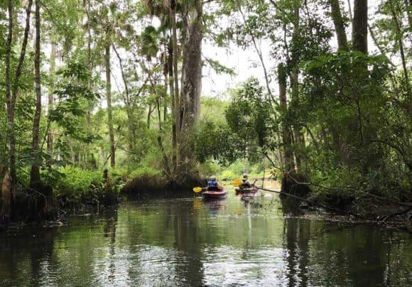 Kayaking on Wakulla River below the famous Wakulla Springs. (Photo: Bonnie Gross)