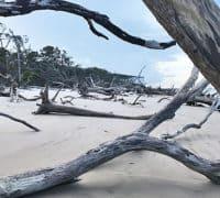 talbot boneyard The Talbot Islands: Paradise on the edge