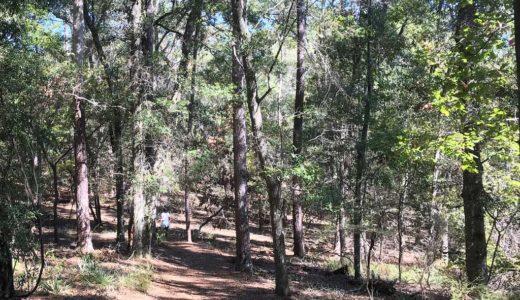 weeping ridge trail at torreya state park