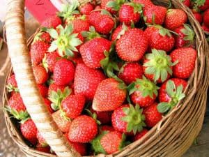 strawberrybasket Florida Strawberry Festival - 2021 Dates TBA