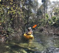 Rock Springs Run Upstream paddle Rock Springs Run, interrupted