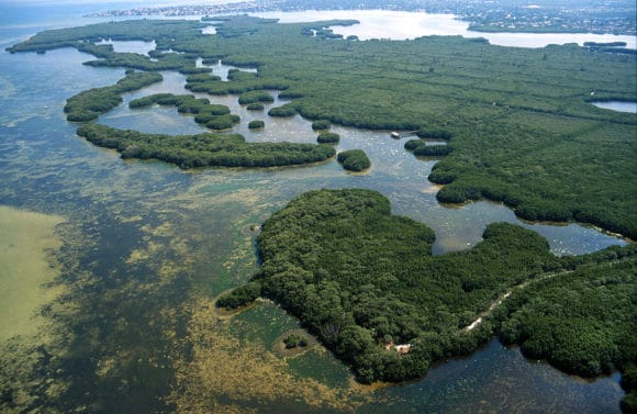 weedon island aerial Five favorite places to paddleboard in Tampa Bay area