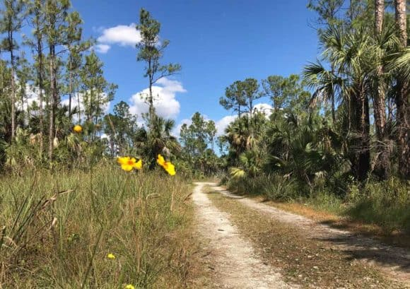 Where the Florida Trail crosses Alligator Alley, you can start this Everglades hiking trail from a rest stop parking lot. (Photo: Bonnie Gross)
