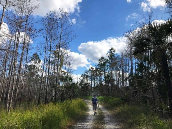 Everglades hiking: A hiker along Florida Trail off Alligator Alley. (Photo: Bonnie Gross)